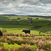 Pastoral Pennine panorama by YorkshireSam