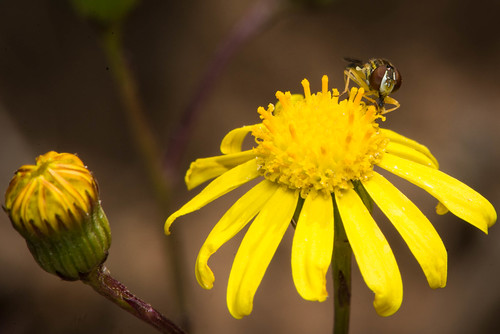 naturaleza flores flower color macro green nature yellow bug mexico exterior natural flor 123 amarillo contraste rodrigo fotografo insecto 2016 ojeda rodrigoojedaphotographer nikond800