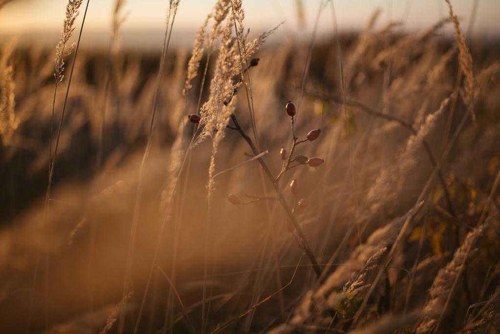Spring - Summer - Fall