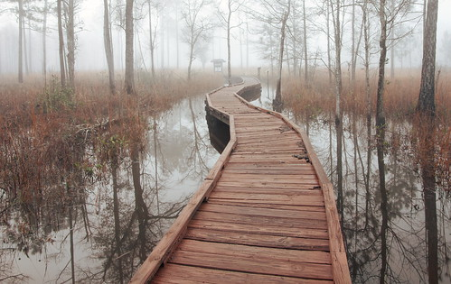 morning trees lana water landscape louisiana flood foggy boardwalk grasses tamron flooded gramlich abitasprings tnc thenatureconservancy sttammanyparish abitacreekflatwoodspreserve bestcapturesaoi elitegalleryaoi canoneosrebelt2i lanagramlich dailynaturetnc16