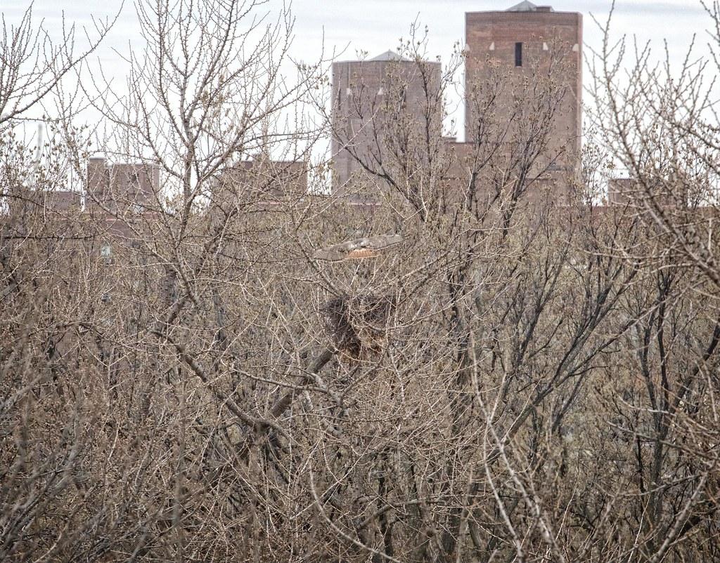 Christo land on the nest