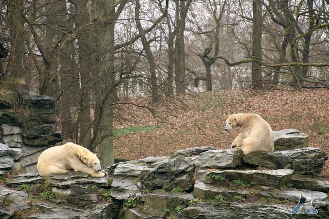 Tierpark Berlin 25.03.2016  0224