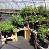 Planting season is here!