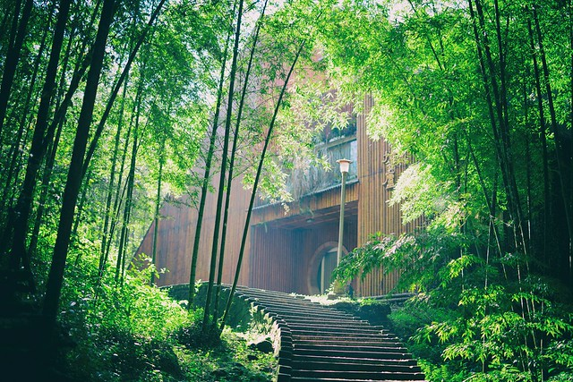 Morning in bamboo forest