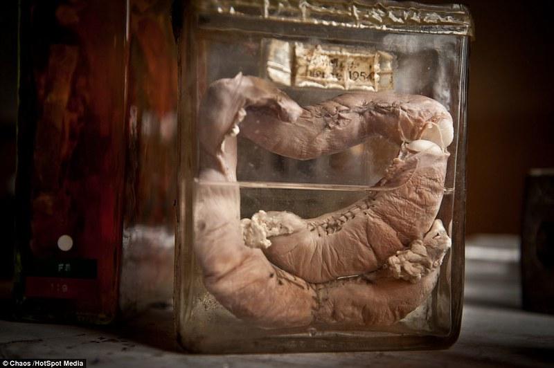 驚魂比利時「廢棄獸醫學院」福馬林的怪誕美學11