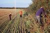 Picking Blackberries (first frame light leak)