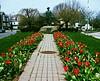 rockery_tulips042216