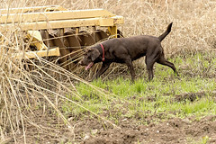 20160110_ RICE DOG 0594_online copy