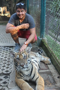 Tiger Kingdom Thailand