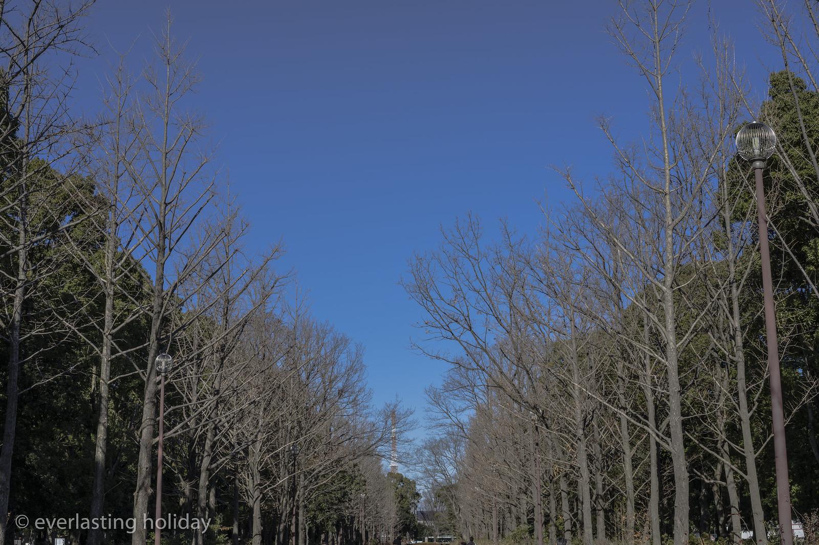 所沢航空記念公園 Tokorozawa Koku Kinen Park-0004