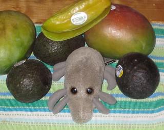 Fruits & Mite