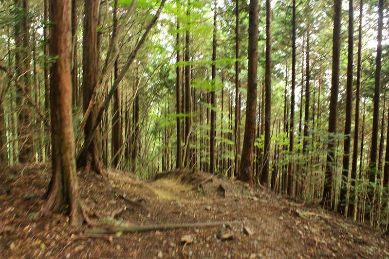 20101023-川苔山-0091.jpg