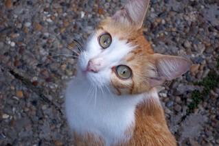 Street cat having beautiful face