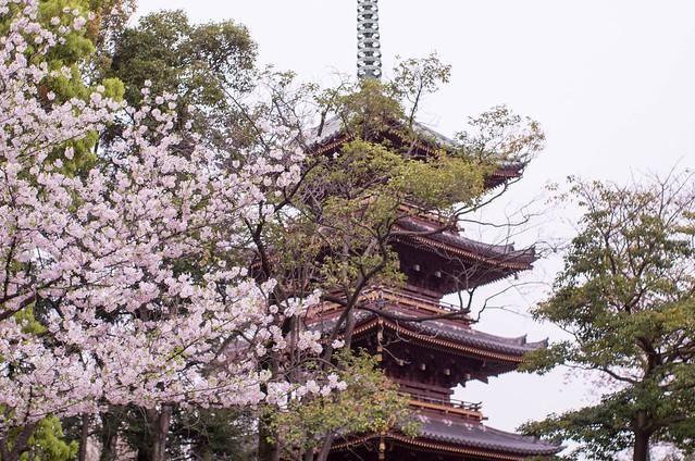 2016/04/09_谷中上野-8
