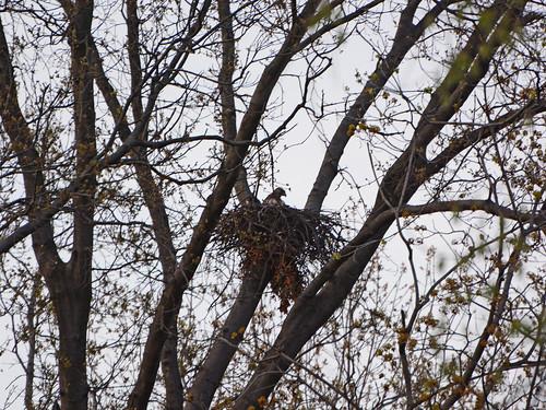 Riverside Nest - 7335
