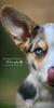 Oliver | Dog Photography Bedfordshire