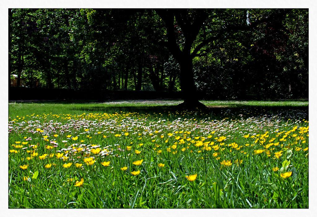 una pradera con flores