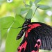 """Black""""n""""Red by james_berriman_photography"""
