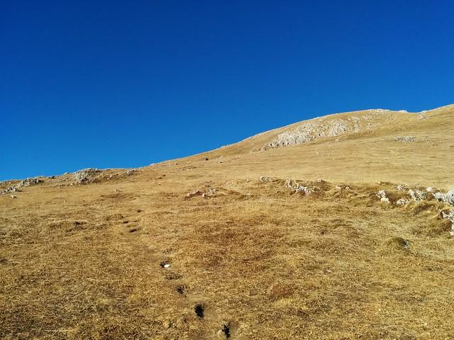 Gemütlich über den Grashang Richtung Hochalpenkopf