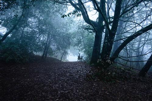family blue trees winter mist green fog forest landscape twilight woods ears deer listen nikon260