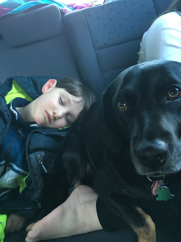 A Boy's Best Pillow