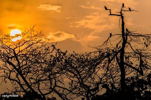 orange sun india lake tree nature birds clouds sunrise flight salt kolkata westbengal d3200