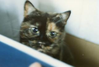 Suzy, Oct 1990