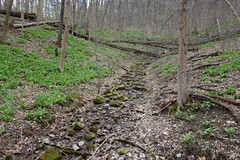 DSC02105 004 Spring Drainage