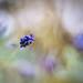 pintando primaveras by ALQVIMIA