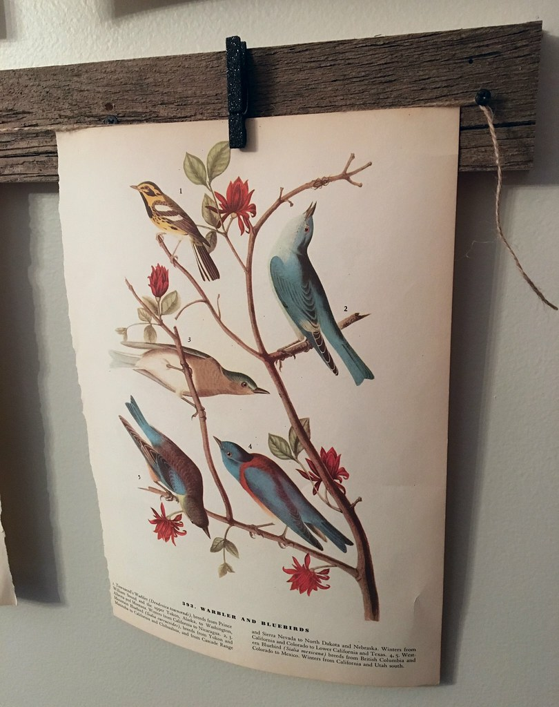Vintage Warbler and Blue Bird Print