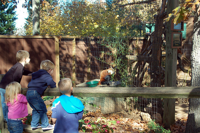 Mill Mountain Zoo