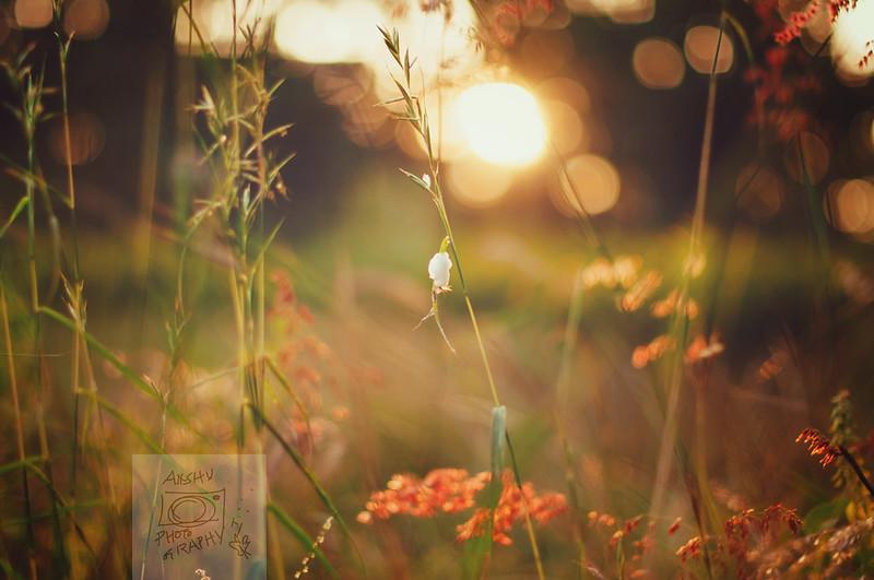 Day 352.365 - Evening Light