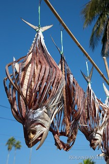 Sittwe - Drying Fish