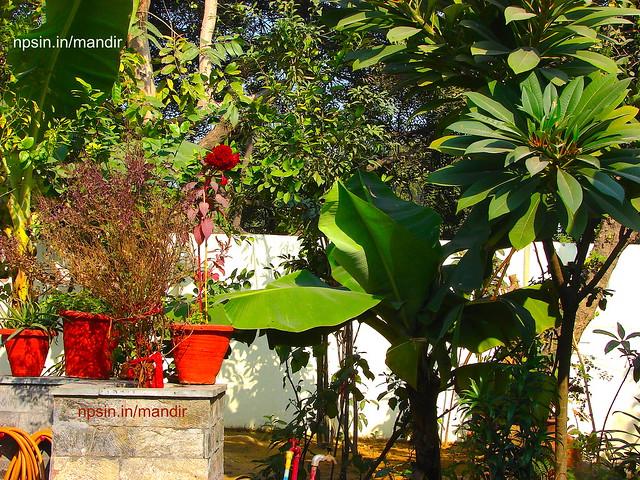 Banana Tree, Maa Tulasi and Greenery