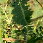 Ant climbing branch