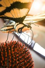 Butterflies and Friends in Weidner