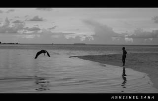 Maldives beach kid with bird