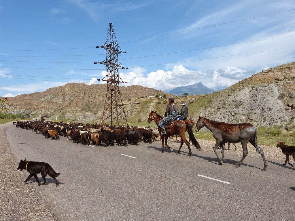 2014 Kirgistan - Tierwelt