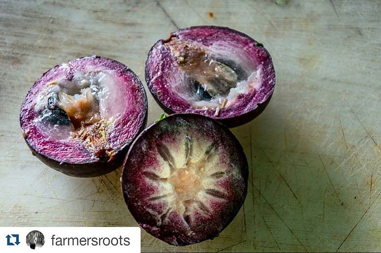 Calm down and take a deep breath and then yes, look again. Yep, that's agbalumo gone turned purple. Look, this world is sooooo small and we have soooooo much in common. This fruit is part of the star apple family... Thank you @notiacs for sharing with