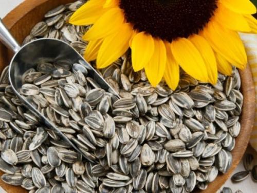Nếu ăn nhiều hạt hướng dương quá sẽ ảnh hưởng đến tính mạng của bạn