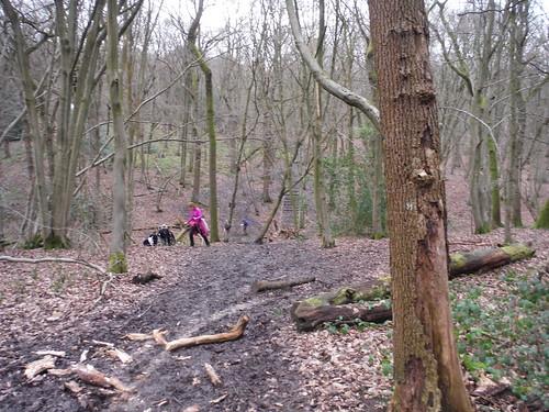 A steep brook crossing in Old Grove, Wormley Wood