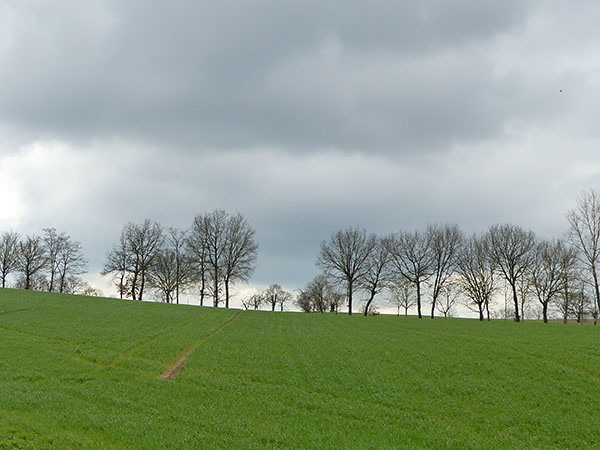 des arbres à l'horizon