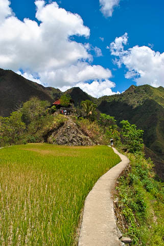 Batad Rice terraces 7