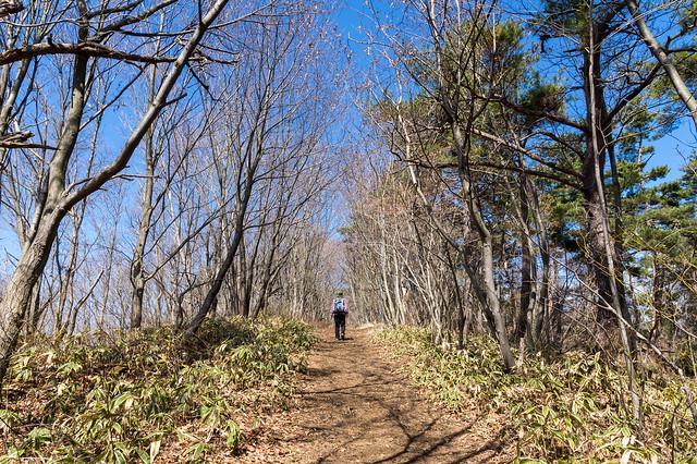 丸山山頂を目指し稜線を進む