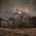 Black Oak_SMB9866 by steve bond Photog