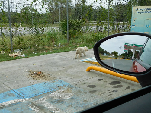 travel dog abandoned car mexico driving stray vehicle creature fiat500 travelogue