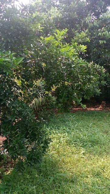 Dijual Tanah kavling lokasi strategis dijual di jaka Permai Bekasi (3)