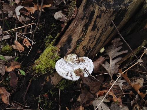 moss_and_mushroom