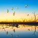 Last light at Menindee Lake by Young Ko