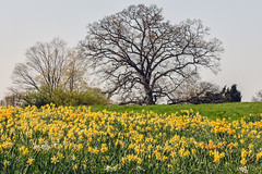 Top of Daffodil Hill,